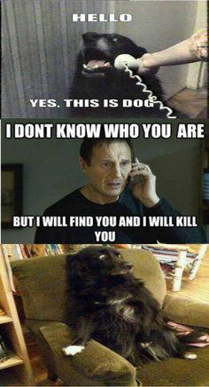 Funny Quotes Humor Laughing So Hard Poor Dog 22 Ideas For 2019 Funny Shit, Funny Cute, The Funny, Funny Stuff, Scared Funny, Stupid Stuff, Super Funny, Funny Things, Memes Humor