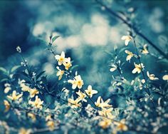 "Blue, Yellow Nature Photography, navy dark blue flower branches floral print large photograph modern wall branch picture, ""Soulful Whispers"""
