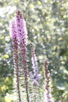 Vielä heleä syyskesän aamuaurinko. Plants, Plant, Planets