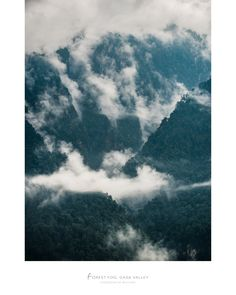 https://flic.kr/p/26hsknr | Forest Fog, Jigme Dorji National Park, Gasa Valley, Bhutan | Untouched semi-tropical forest covered in morning fog captured in the beautiful Jigme Dorji National Park, Gasa District, Bhutan.