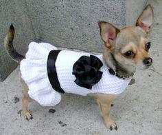 Ropa para perros, ¿a favor o en contra?