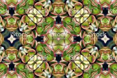 Digitally Designed Modern Style Nature Inspired Mandalas from my. Spiritual Practices, Abstract Photos, Nature Inspired, Roots, Modern Design, Succulents, Royalty Free Stock Photos, Creative, Inspiration