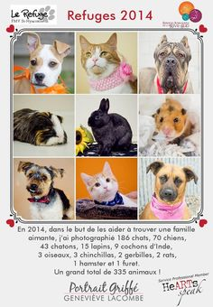 In 2014, HeARTs Speak member Geneviève Lacombe Photographe helped 335 animals find a home by providing professional portraits: 186 cats, 70 dogs, 43 kittens, 15 rabbits, 9 guinea pigs, 3 birds, 3 chinchillas, 2 gerbils, 2 rats, 1 ferret, and 1 hamster.