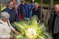 A vast cauliflower - weighing almost 27.5kg - has broken the world record by almost 3kg, the Telegraph reported.  The vegetable was grown by Peter Glazebrook, who already owns four world records for the longest beetroot and parsnip and the heaviest onion and #potato.  The record was broken on Easter Monday as seven adjudicators visited his #greenhouse in Newark, East Midlands, to inspect the 27.485kg vegetable. #Weird #News #Dunya #News