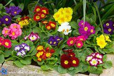 Какие цветы посадить в тени. 15 названий цветов, которые любят тень.   Красивый Дом и Сад