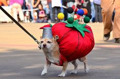 Dogs in costumes are adorable. Here are a few of our favorite ones. From the clawguard.com blog