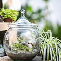 How to plant and care for a terrarium