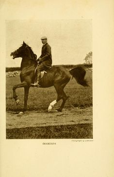 *Imamzada Color: b Height: 15.2H GSB*193; AHR#210  Bred by Miss Ethlered Dillon, England. (GSB gives Lord Arthur Cecil, England, as breeder)  1905 Imported to USA by Spencer Borden, Fall River, Massachusetts.  Died in 1920.  Strain: Kuhaylan Nuwaq