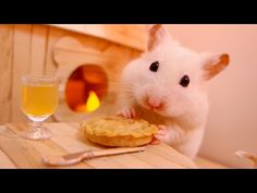 Opening a Hamster Hamper!  - YouTube