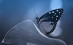 The Butterfly Effect by Ribella ~ Beautiful