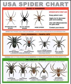 Poison Spiders Chart. Good to know.