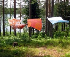 Clothesline in our backyard