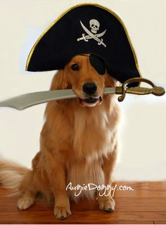 dog pirate costume dog costumes dog lab basset hound dog accessories happy animals funny animals cute animals golden puppy