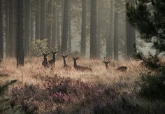 Herd of Deer in a Forest