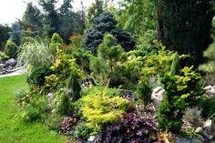 Garden Canadensis