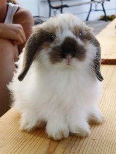 748 Best Rabbits Rabbit Care Images In 2019 Rabbit