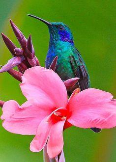 Hummingbird by Sean Johnstone