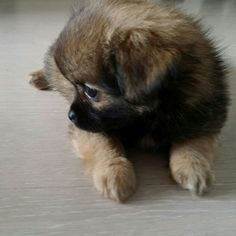 Bibi adoreble puppy