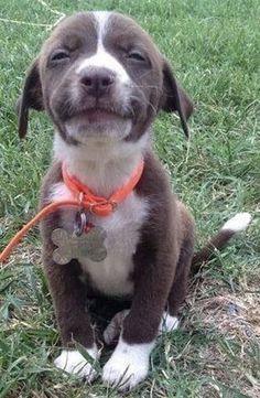 #dog #dog #puppy #dogoftheday