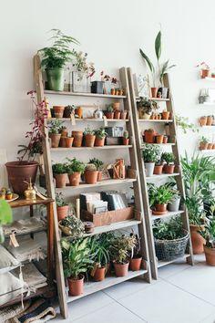 Object of Desire: Wooden Ladder Bookshelf for Plants: Gardenista