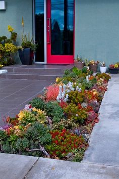Colourful succulent pathway border.