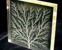 Chaotic Fractal Branching Pattern from Electrical Discharge (Lichtenberg Figures)