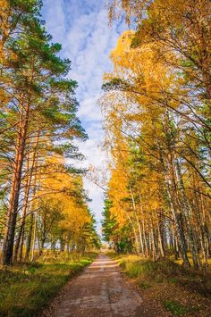 Road in autumn forest (Russia) by Sergey Grishin / 500px