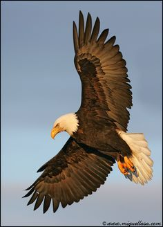 Isaiah 40:31 - But those that wait upon the LORD shall renew [their] strength; they shall mount up with wings as eagles; they shall run, and not be weary; [and] they shall walk, and not faint.