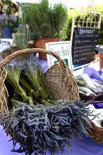 Lavender Festival | Oak Ridge, Tennessee