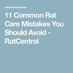 11 Common Rat Care Mistakes You Should Avoid - RatCentral