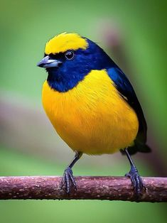 Cute Birds, Pretty Birds, Beautiful Birds, Animals Beautiful, Kinds Of Birds, Tropical Forest, Colorful Birds, Bird Art, Beautiful Creatures