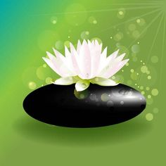 Beautiful lotus flower on zen stone green background vector Medical Student Humor, Medical Assistant Quotes, Medical Memes, Medical Posters, Medical Photography, Fitness Photography, Doctor Tattoo, Lotus Logo, Medical Design