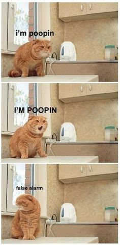 I'm pooping - Follow us @showmeCats - #showmecats #thefunny #FunnyCats