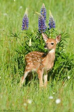 Doe, a Deer, a female Deer....one of my favorite Julie Andrews movies