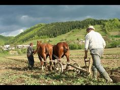 Erdély! Day Work, Places To Visit, Romania, Horses, Film, Digital, Prints, Animals, Image