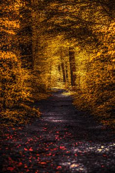 Woodland path (Switzerland) by John Noe