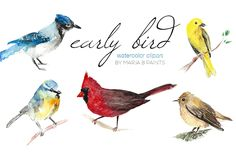 Watercolor Clip Art - Birds by Maria B. Paints on Creative Market
