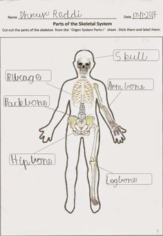 Nature Of Science Lesson Plan Body Systems