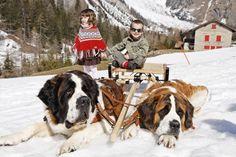 Svizzera, Vallese, San Bernardo. Martigny: a spasso nella neve con i teneri San Bernardo. http://www.familygo.eu/viaggiare_con_i_bambini/svizzera/svizzera_vallese_san_bernardo_famiglia_bambini.html