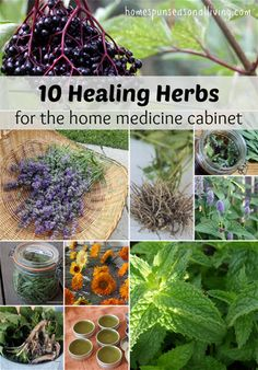 Healing herbs are an important and necessary part of living a healthy and all-natural life. Although there are many herbs that can help with healing, a particular few are ideal to have available year round. These powerful healing herbs include: anise hyssop, calendula, dandelion, elderberry, lavender, lemon balm, mint, plantain, sage, and valerian. Discover more …