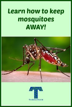 High Quality Warm Spring And Summer Weather Is Upon Us. Donu0027t Let Pesky Mosquitoes Ruin  · Keeping Mosquitos AwayWarm ...