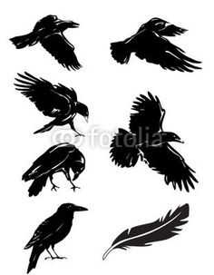 raven funeral: