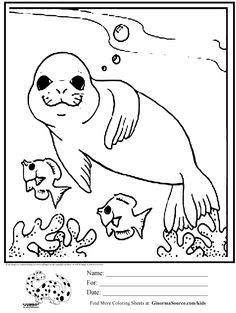 baby seal coloring page projects to try coloring pages baby seal seal. Black Bedroom Furniture Sets. Home Design Ideas