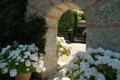 merveilleux hortensias blancs !