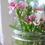 ideas for celebrating spring