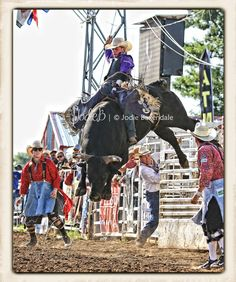 Belle Fourche, SD; 2013 Black Hills Roundup Rodeo; Steve Woolsey rider; photo by Jodie Baxendale