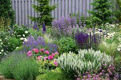 Život v zahradě: června 2016