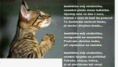 Jokes, Cats, Animals, Gatos, Animales, Husky Jokes, Animaux, Memes, Animal