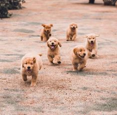 How cute is this Puppies?️ : EachWeek I will feature a few accounts! Use ️ … How cute is this Puppies🐾?❤️ 📸: EachWeek I will feature a few accounts! Cute Little Puppies, Cute Little Animals, Cute Dogs And Puppies, Cute Funny Animals, Doggies, Retriever Puppy, Puppy Breeds, Cute Animal Pictures, Cute Creatures