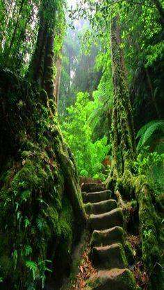 The Fern Forest Path. #SaveForests Please help us stop forests being erased. http://www.wwf.org.uk/how_you_can_help/campaign_with_us/forest_campaign/?utm_source=pinterest&utm_medium=social&utm_campaign=saveforests&pc=ANZ008010